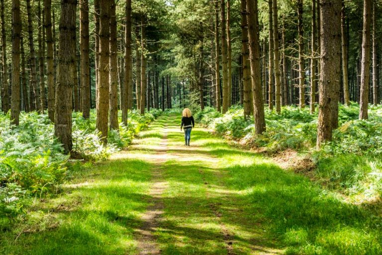 Thetford Forest – UK's Largest Man-Made Lowland Pine Forest