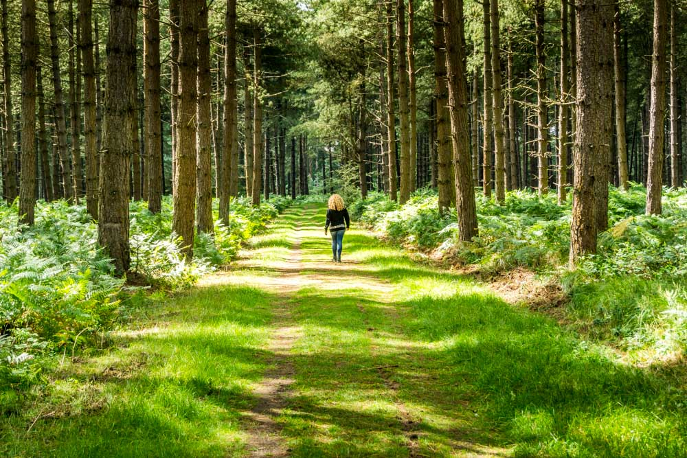 Thetford Forest - UK's Largest Man-Made Lowland Pine Forest