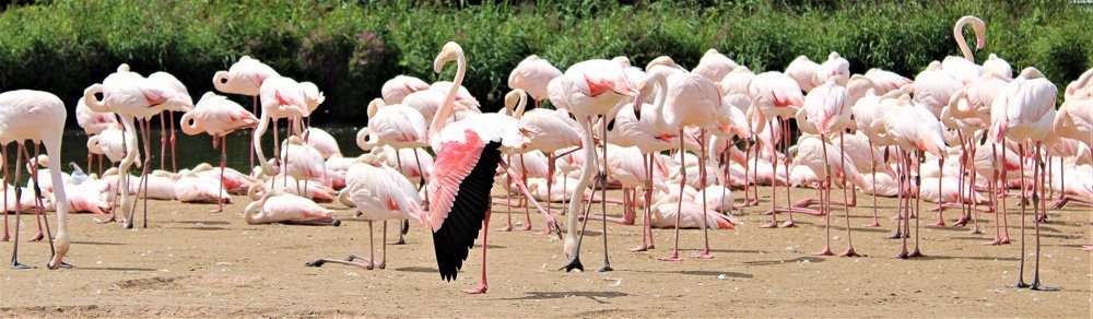 Flamingo-2 Feathered Intelligence, The Way We Think And Learn About Birds