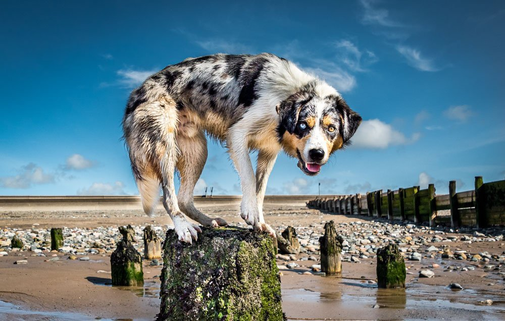 Dog Photography Holiday Retreats – New Forest