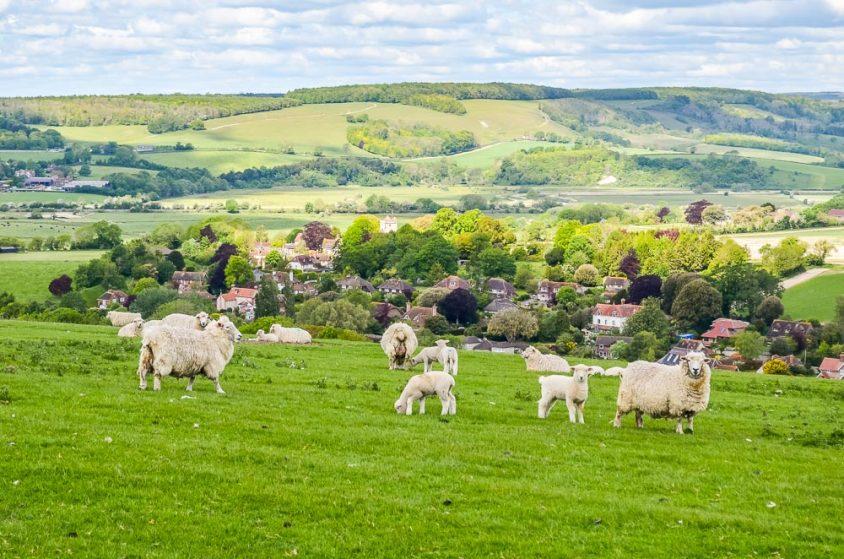 Arun Valley Walk, Wepham Down And The Village of Burpham