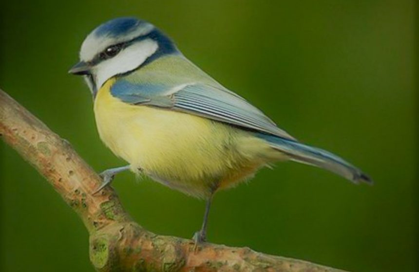 Feathered Intelligence, The Way We Think And Learn About Birds