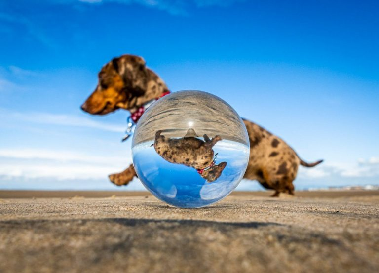 Lensball Photography – Refractions, Creativity and Tips