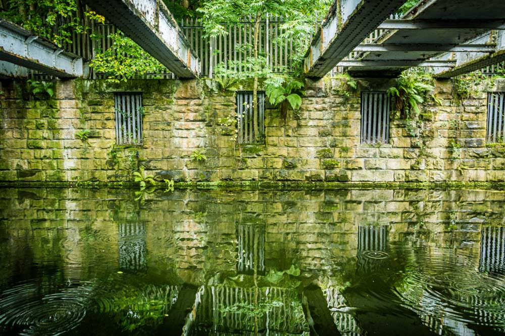 greenery on leeds liverpool canal