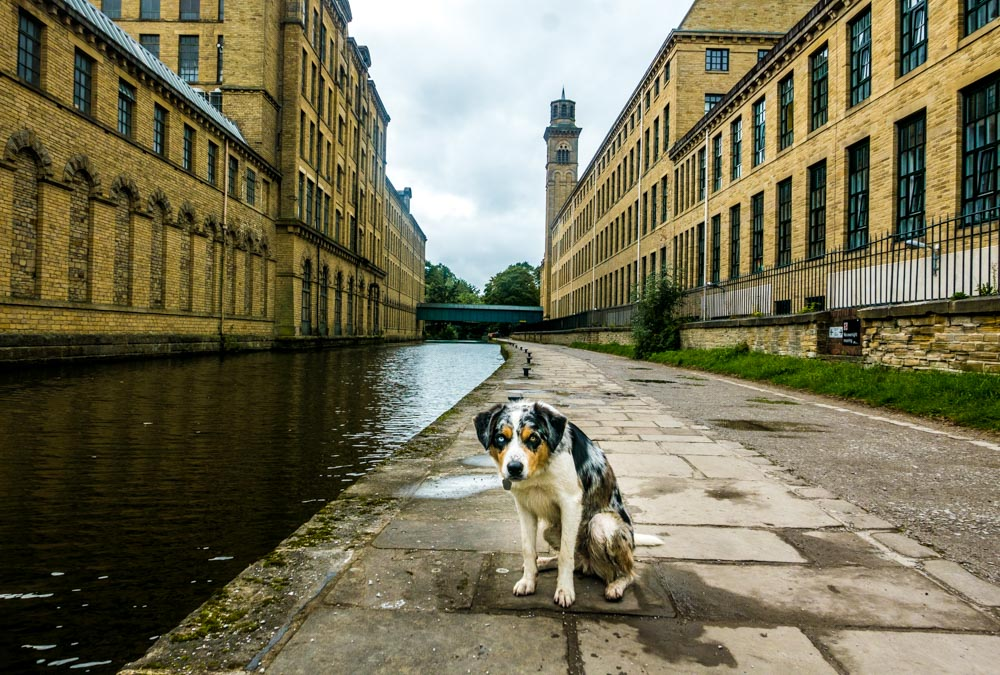 on the canal at Saltaire