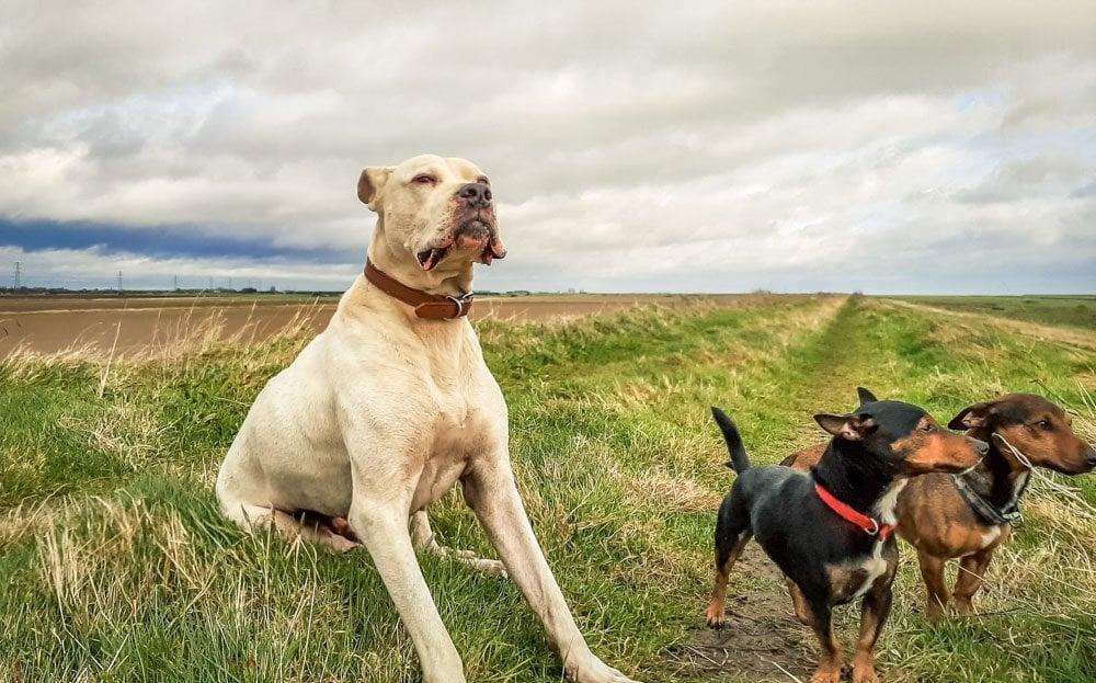 3 dogs in Fosdyke bridge