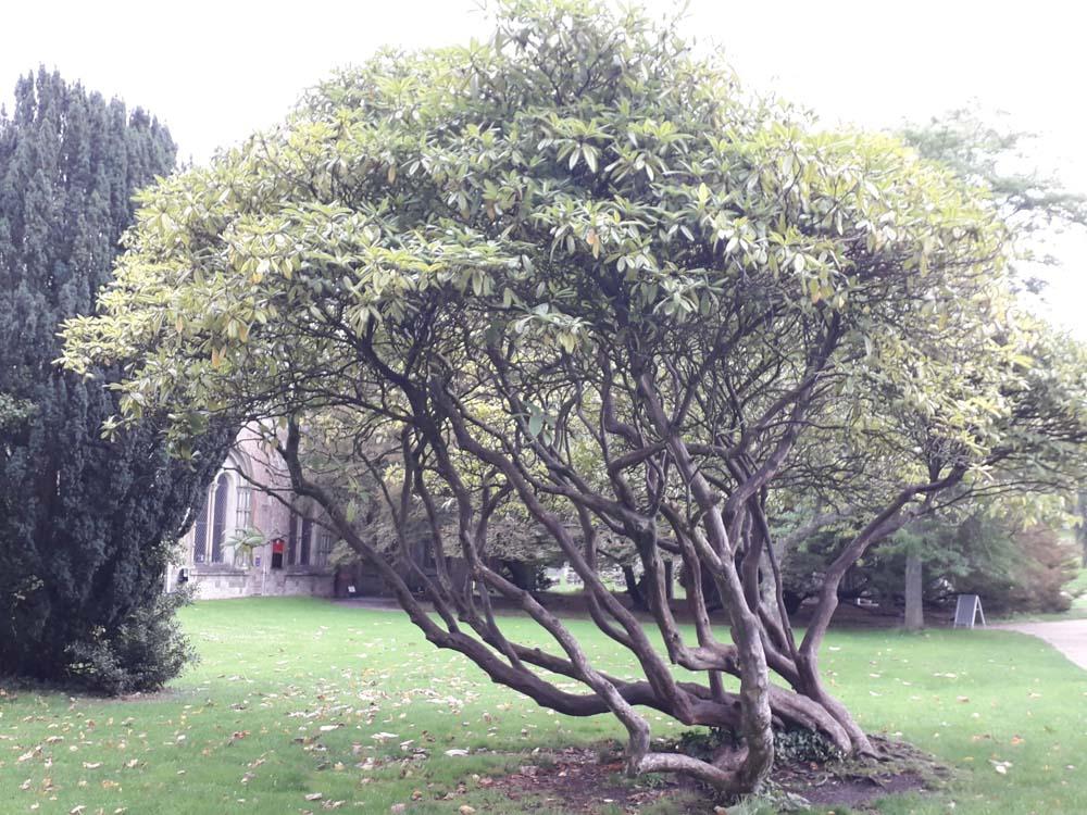 evergreen tree in Autumn