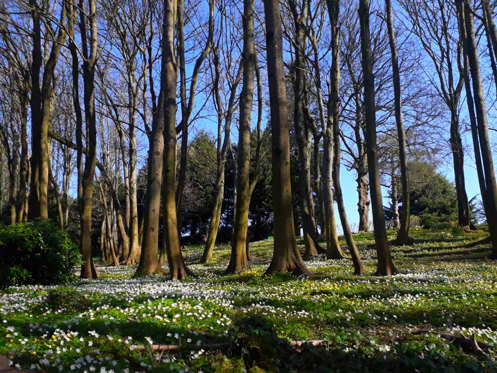 woodland trees and flowers