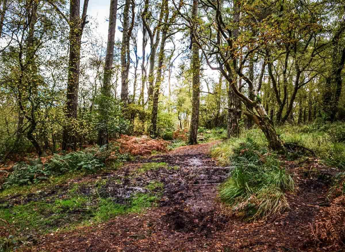 muddy pathway staffordshire