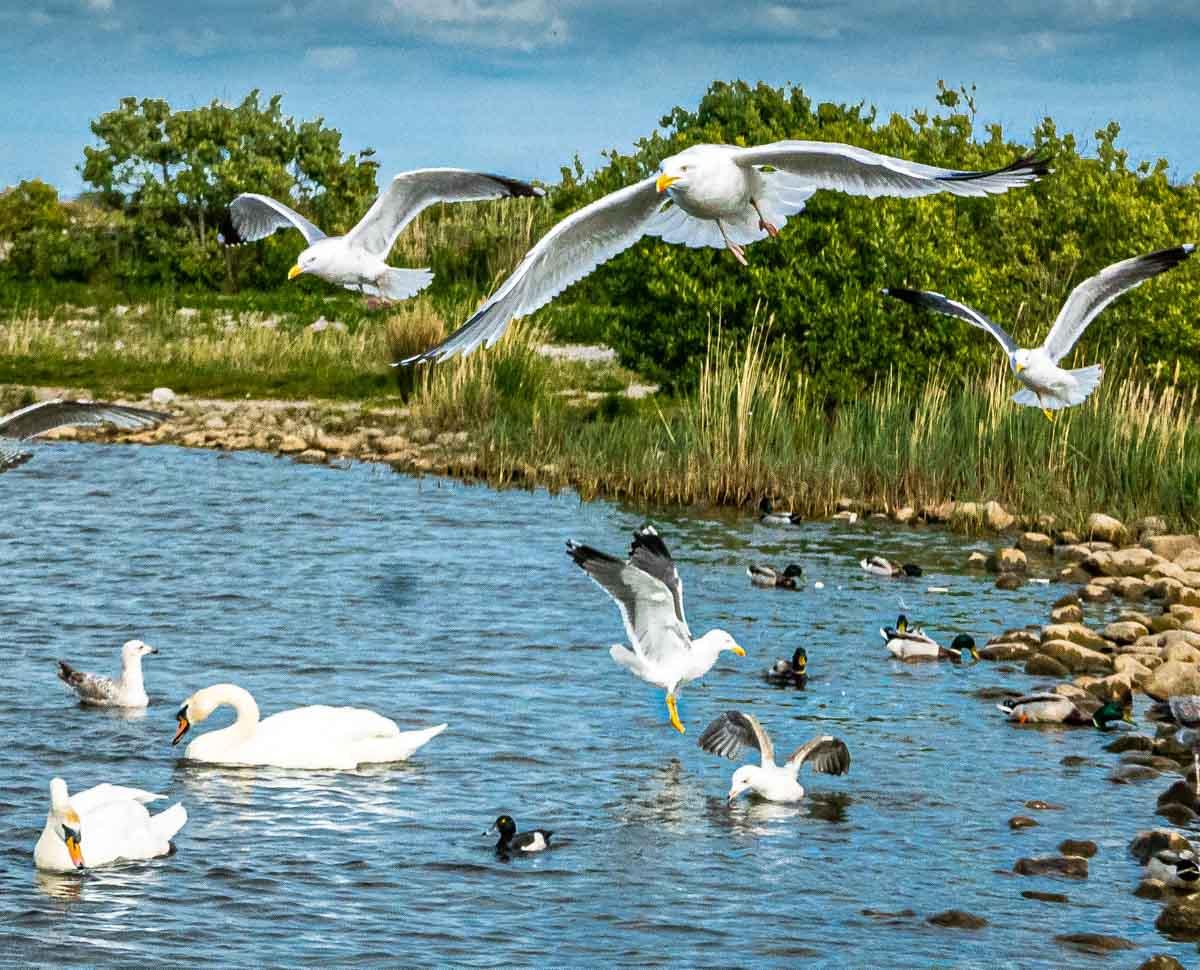 birds at fleetwood marsh