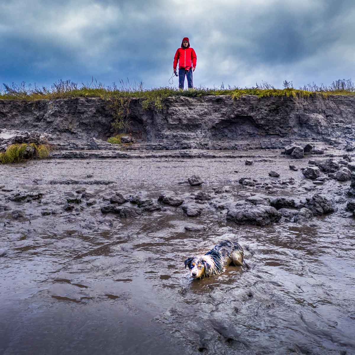 in the mud on wyre estuary