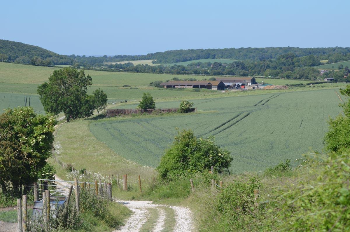 kingley vale path