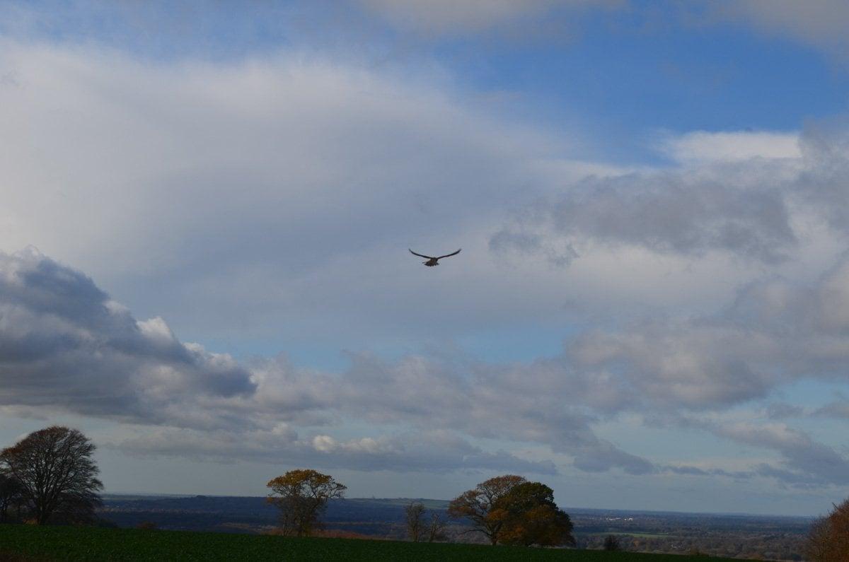 bird of prey above