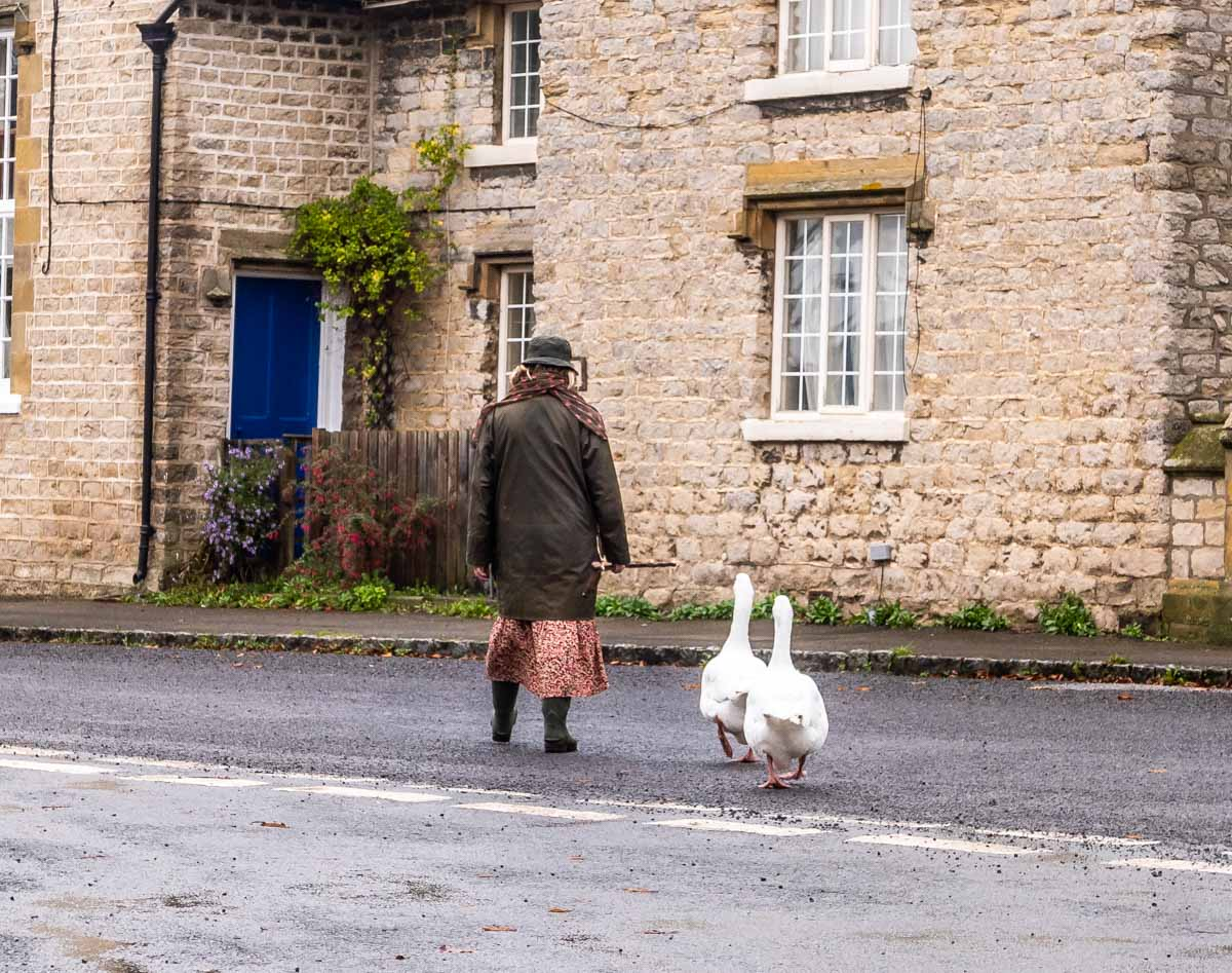 walking-geese Harome To Nunnington - A Ryedale North Yorkshire Walk