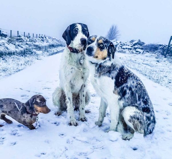 three happy dogs in the snow
