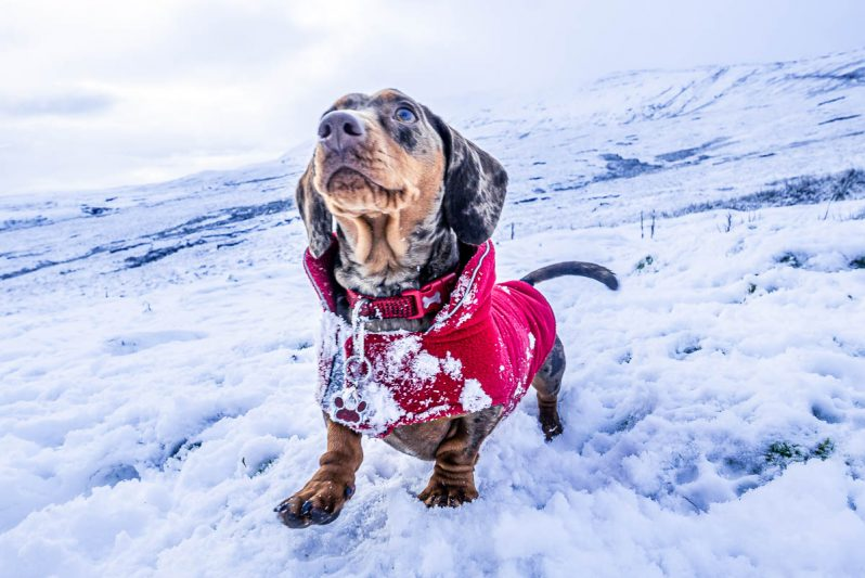 dachshund on a mountain