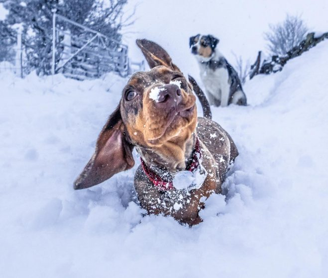 The Dogs And The Fun Of Snow With Winter Care Tips