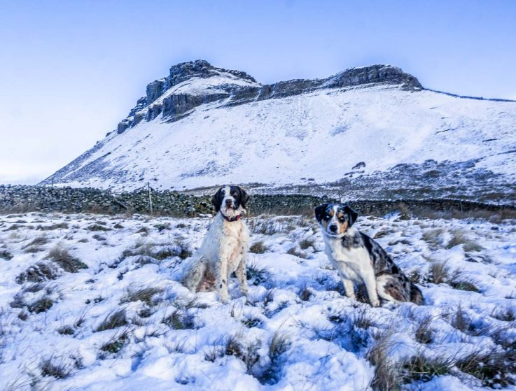 dogs-and-summit-737x559 A Winter Climb Of Pen-y-ghent