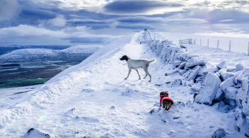 dogs-running-at-top-798x443 Whernside - A Winter Walk To The Top Of The Yorkshire Dales