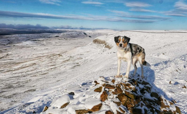 lookout-dog-798x488 A Winter Climb Of Pen-y-ghent