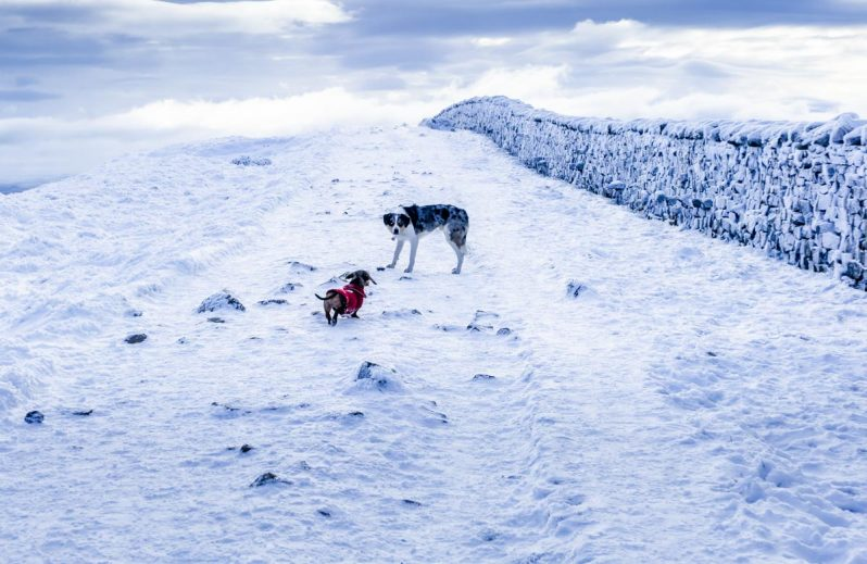 malc-and-gladys-798x519 Whernside - A Winter Walk To The Top Of The Yorkshire Dales