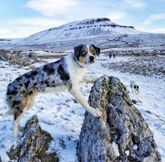 posing dog on mountain