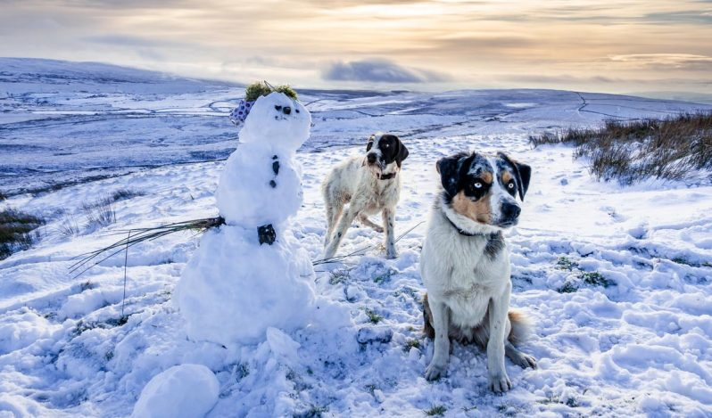 two dogs and a snowman