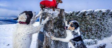 whernside-summit-364x156 Trending