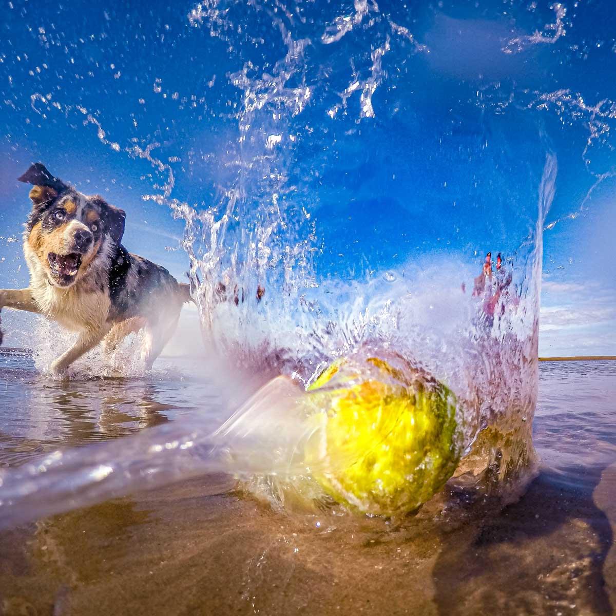 dog splash ball