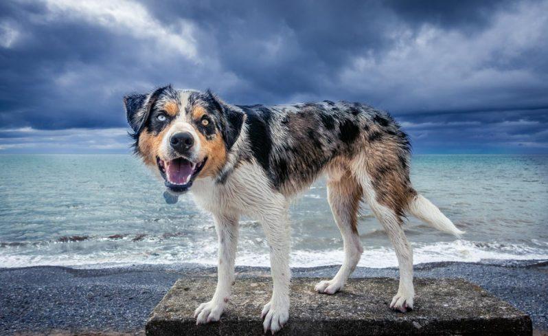 dog on sea wall