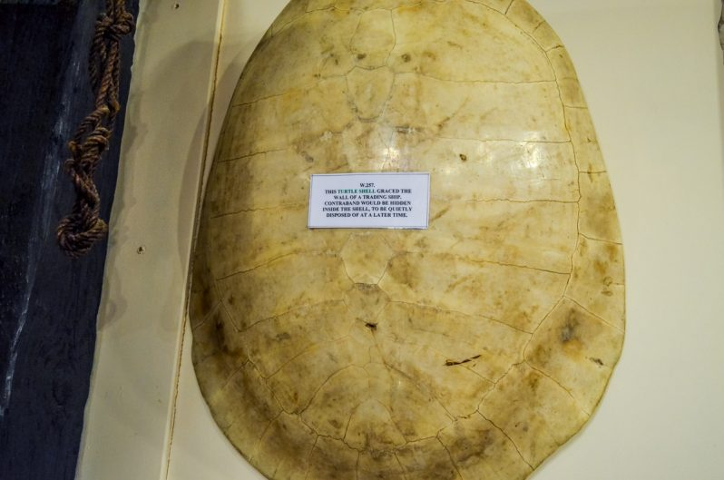 Turtle Shell, used to hide contraband