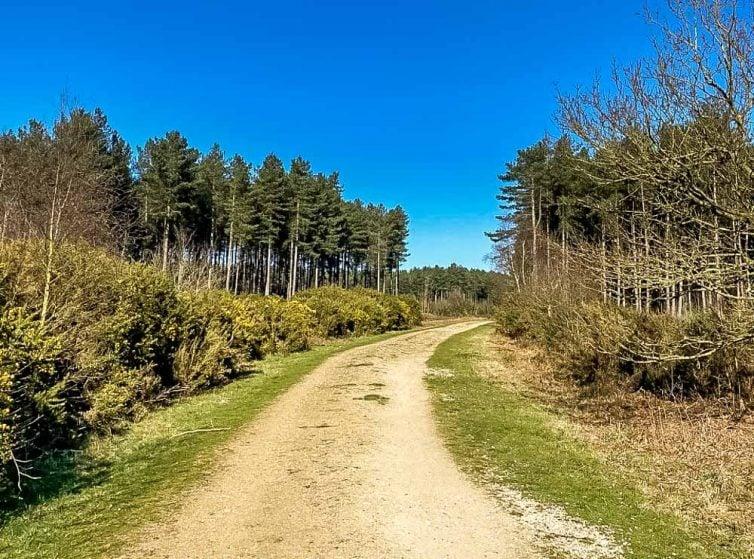 Horsford wood track