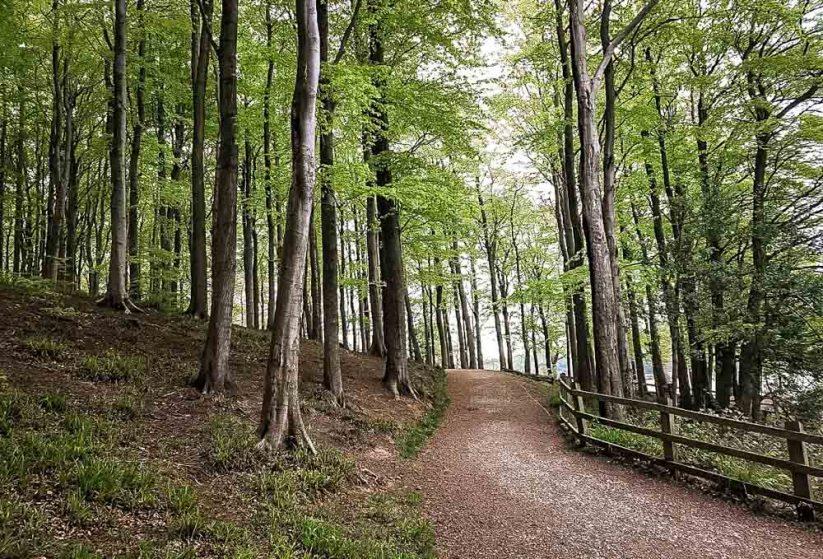Linacre reservoir woodland