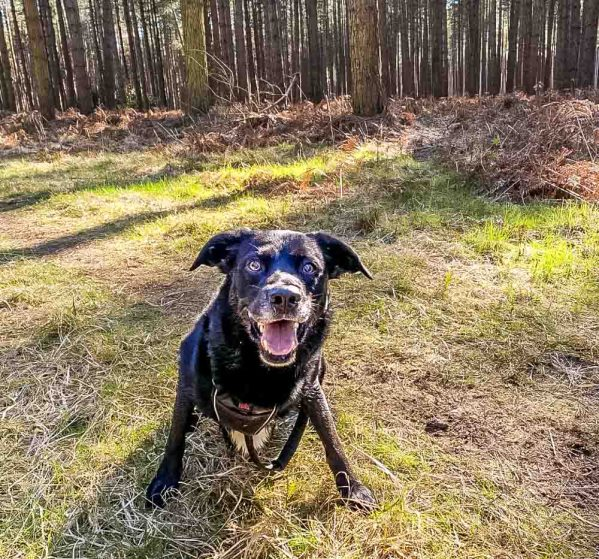 Loki the happy dog