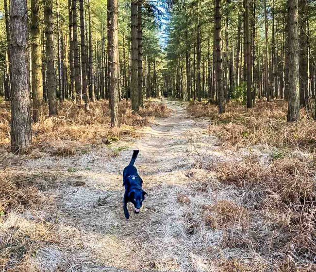 dog playing in woods