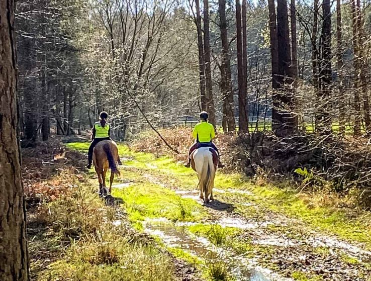 horse riders in the woods