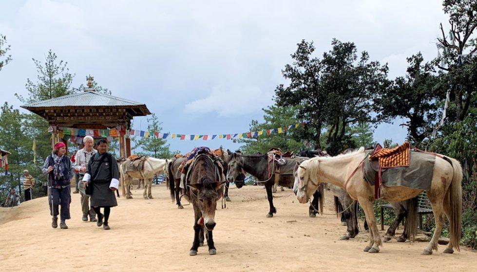 horses resting half way