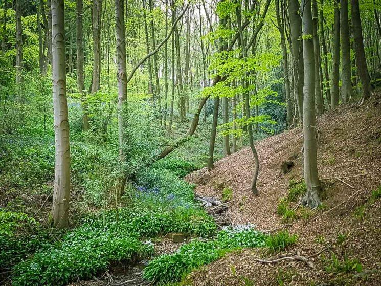 woodland walk at Linacre reservoir