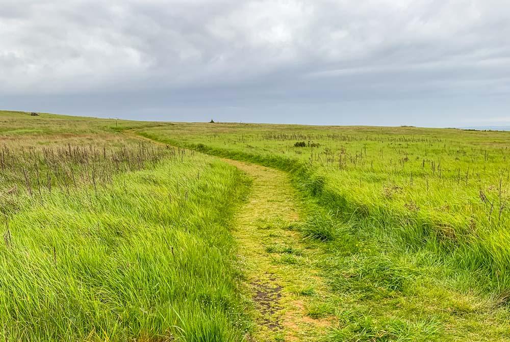 American Camp mowed trail