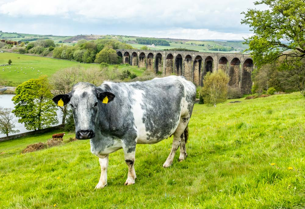 cow and hewenden viaduct