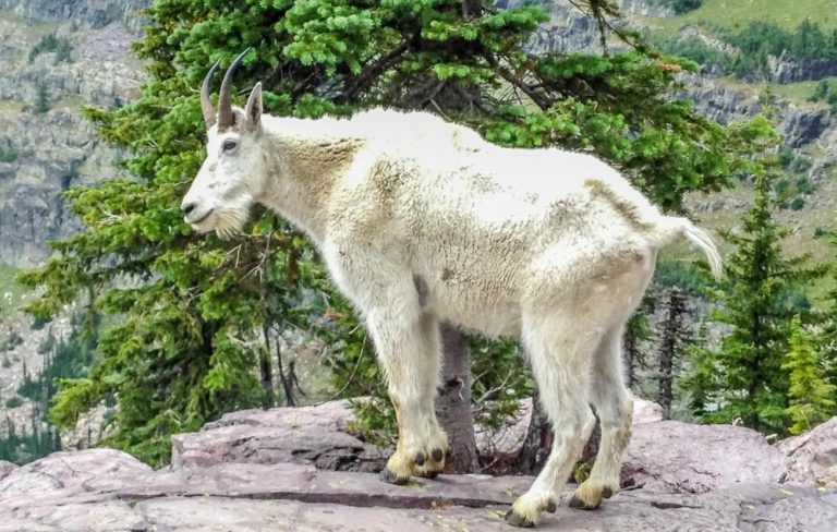 Sperry Chalet Trail, Glacier National Park, Montana