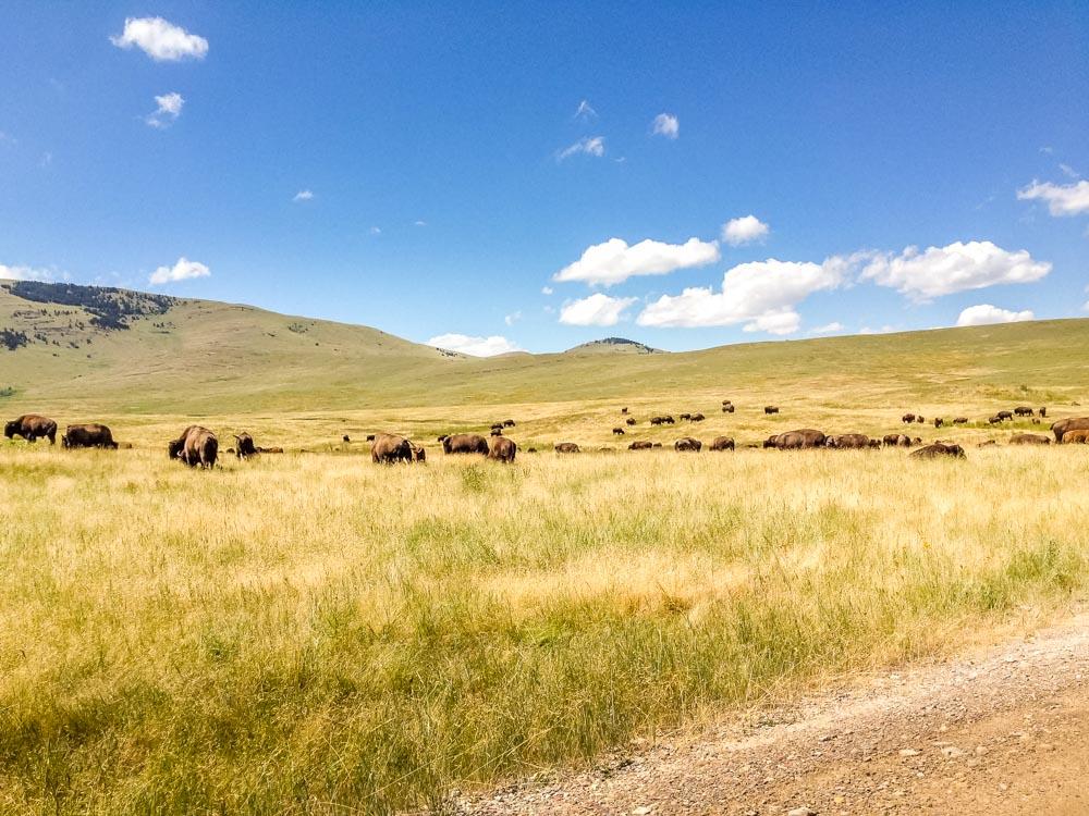 herd at distance