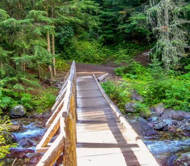 log bridge half way up