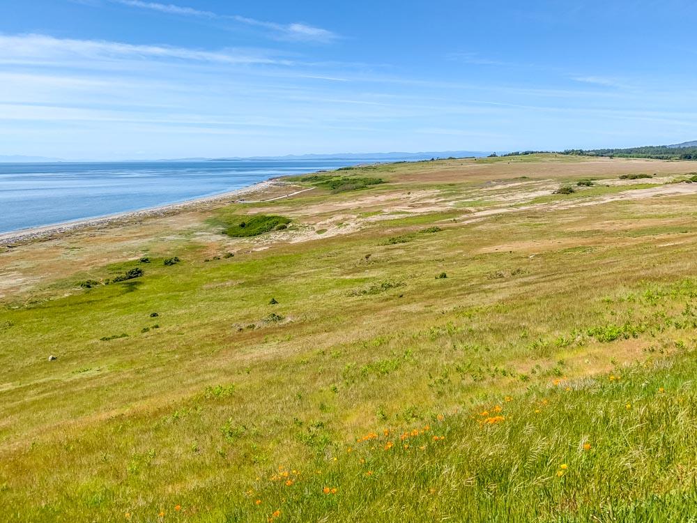 south beach meadow