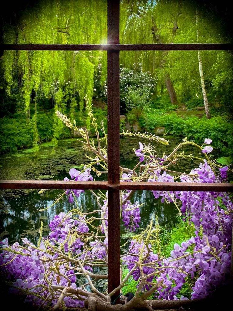 flowers through the window