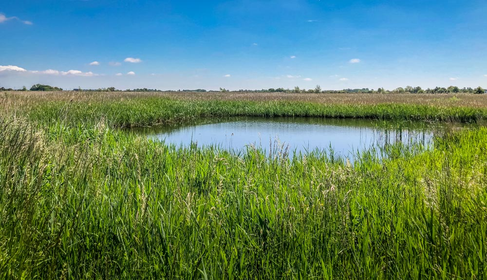 lagoon in reeds