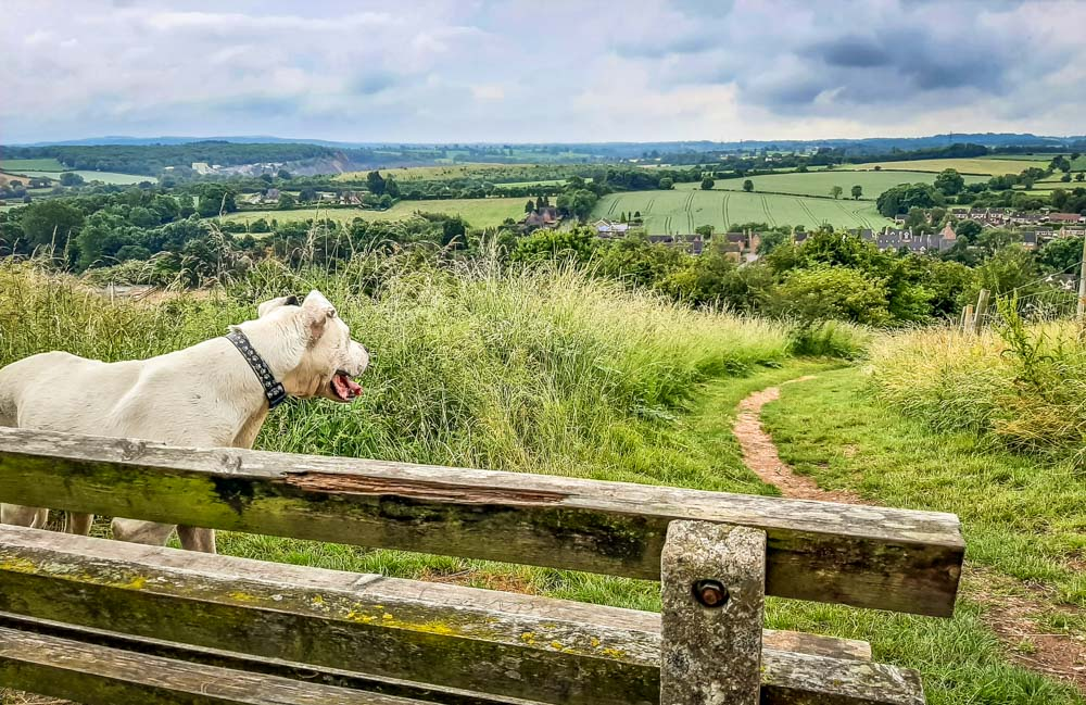 A Bench on Breedon Hill