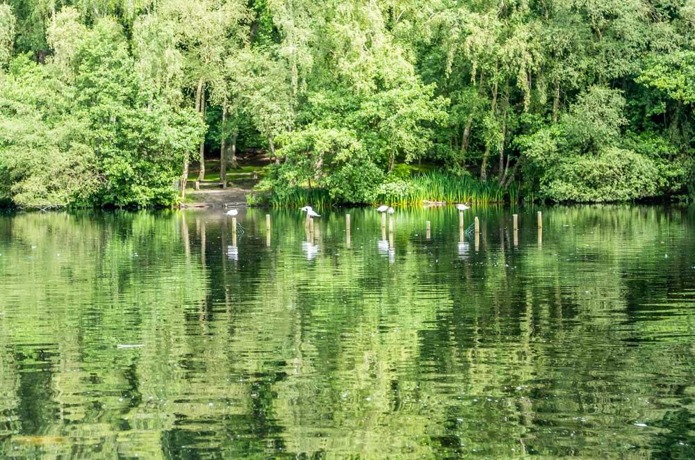 coppice pond