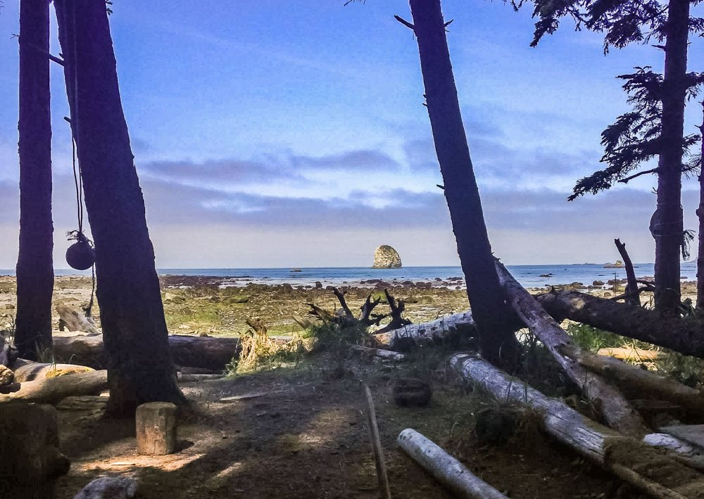 back to the forest at sand point