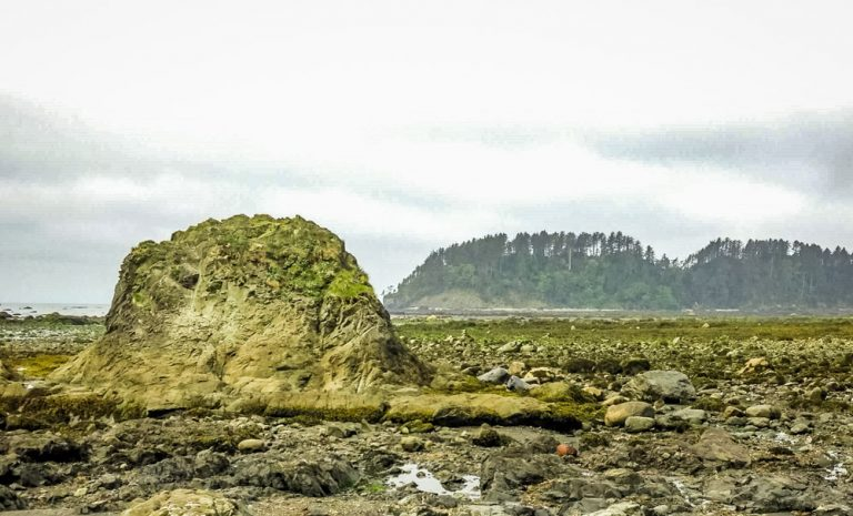 The Ozette Triangle Loop Trail, Olympic National Park